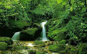 La cascade curative