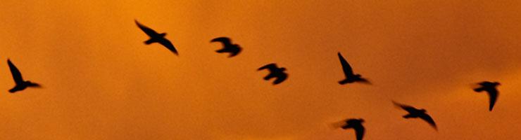 des oiseaux et des signes